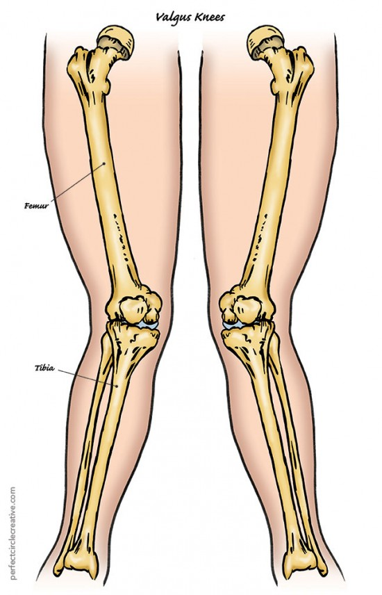 Hand drawn illustration of values knees showing the femur and the tibia.