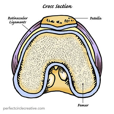 Hand drawn illustration of a cross section view of the human knee.